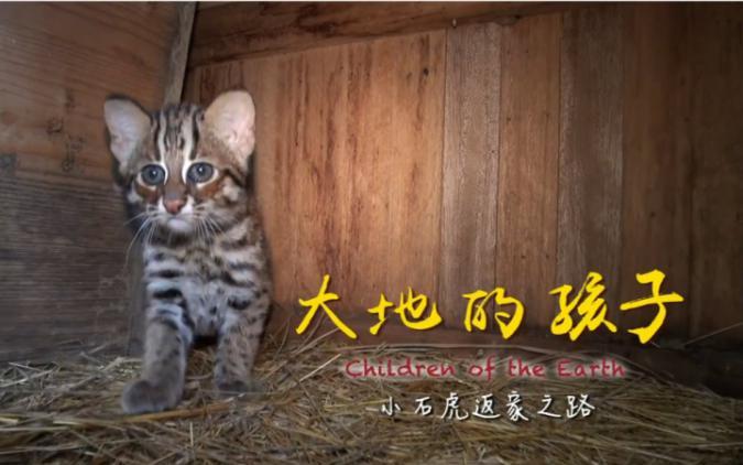 da_di_de_hai_zi_-xiao_shi_hu_fan_jia_zhi_lu_2_0.jpg