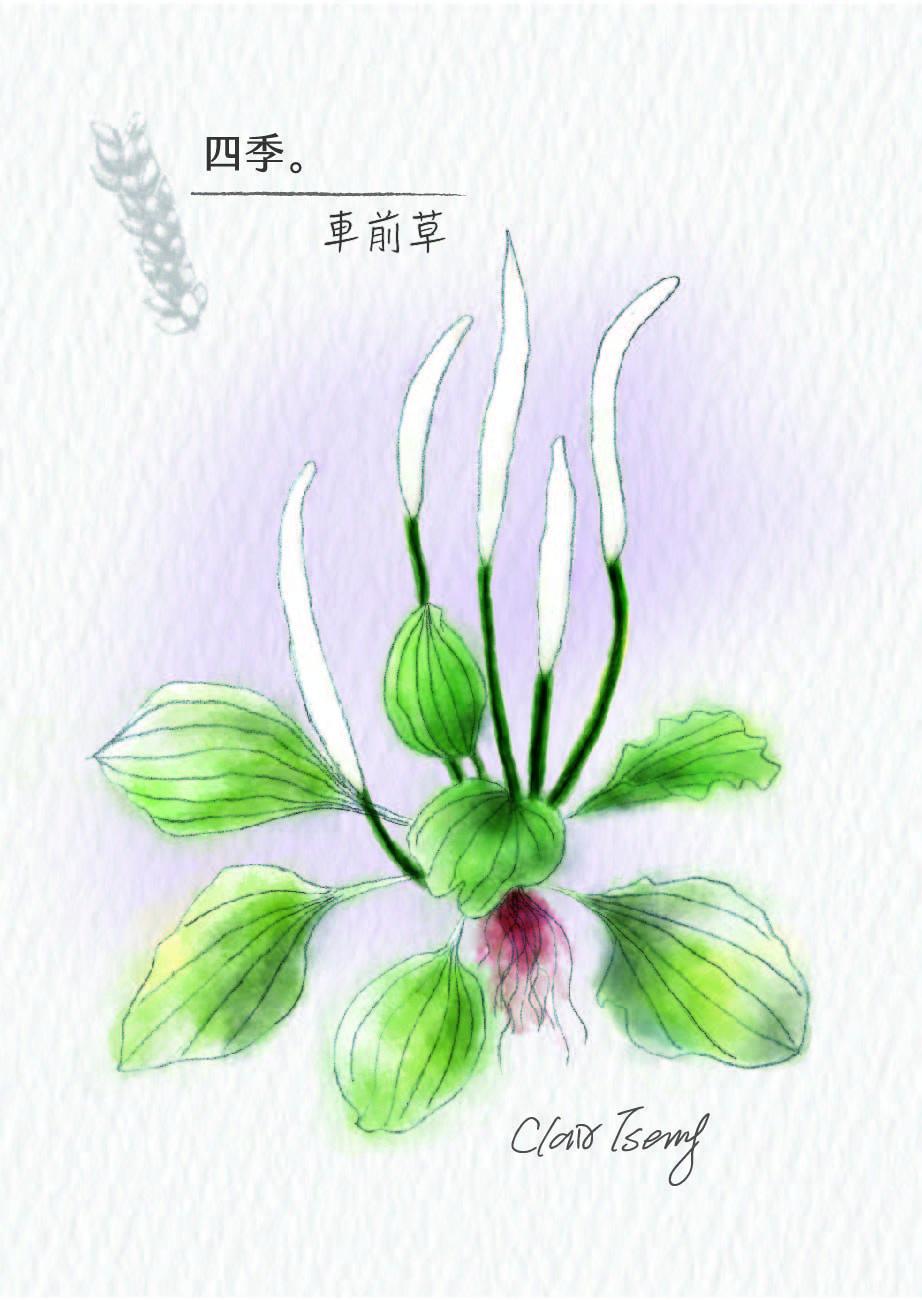no.27_che_qian_cao___shu_qian_a_0729_-01.jpg
