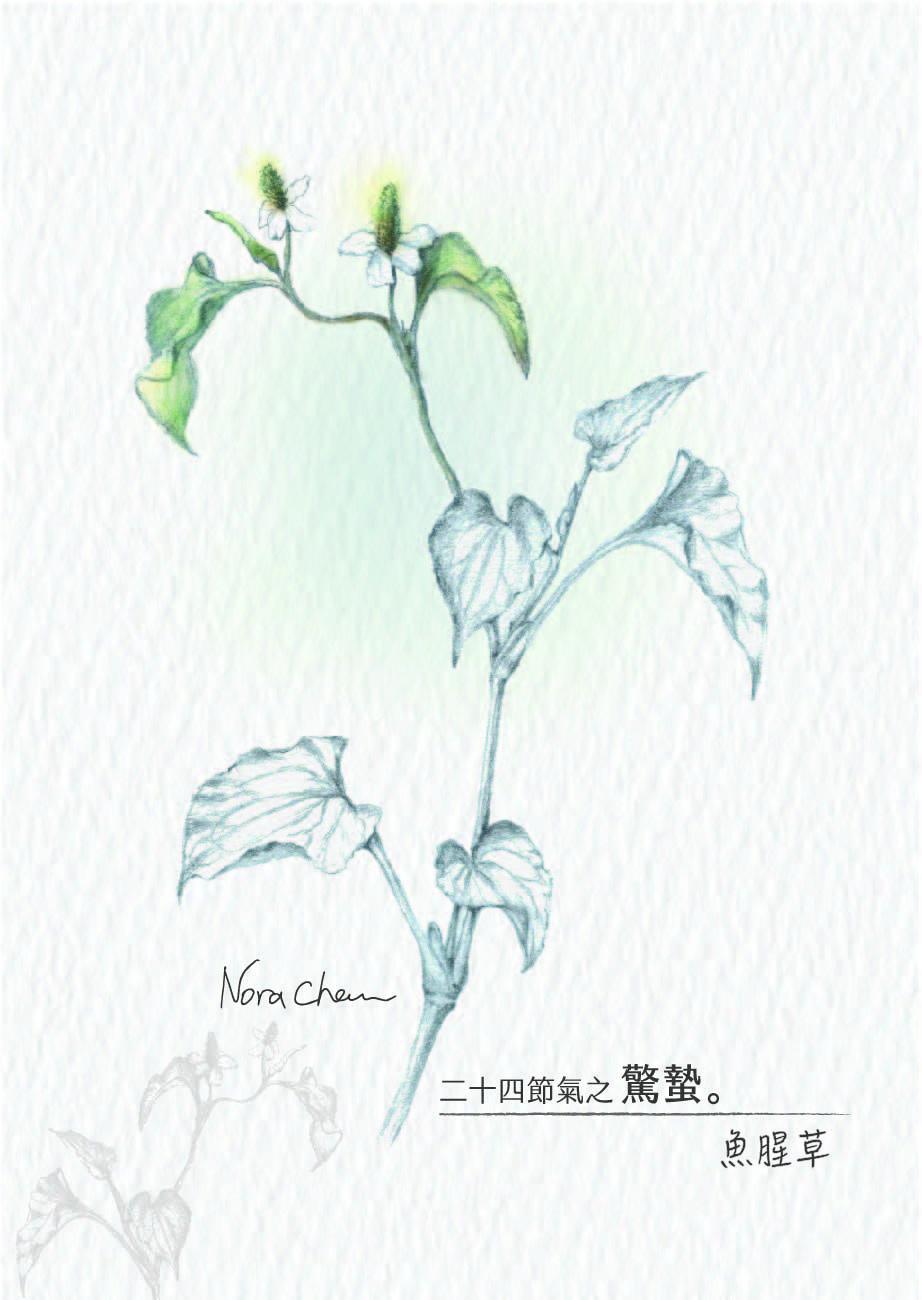 no.3jing_zhi_-yu_xing_cao___shu_qian_a__0729_-01.jpg