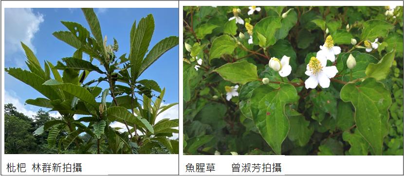 ye_cao_jiang_zuo_de_qiu_ji_yang_.png